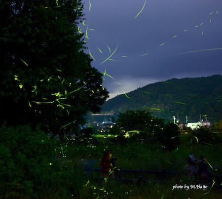 20100623-kinihotaru.jpg
