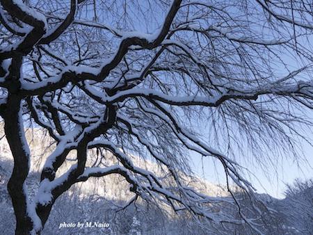 20120126-yuki-sidare.jpg